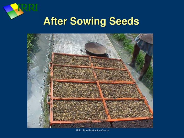After Sowing Seeds