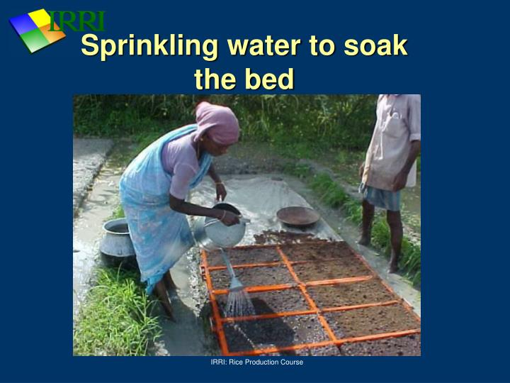 Sprinkling water to soak the bed