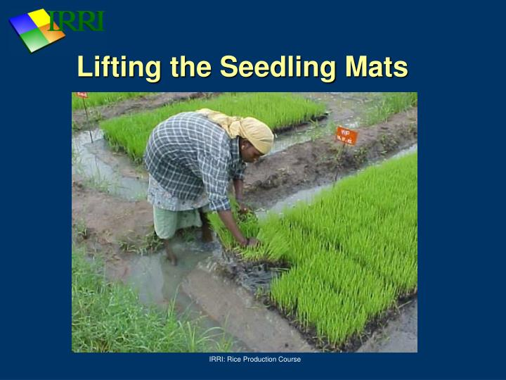 Lifting the Seedling Mats