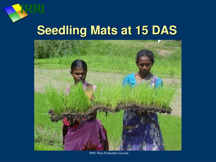Seedling Mats at 15 DAS