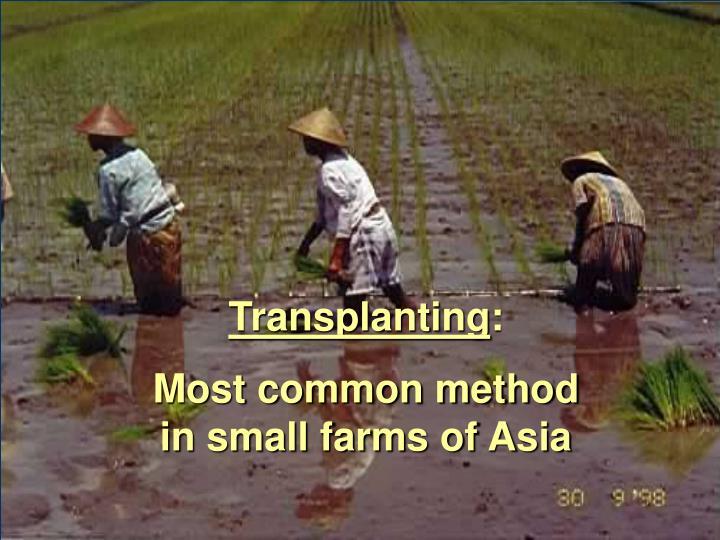 Transplanting