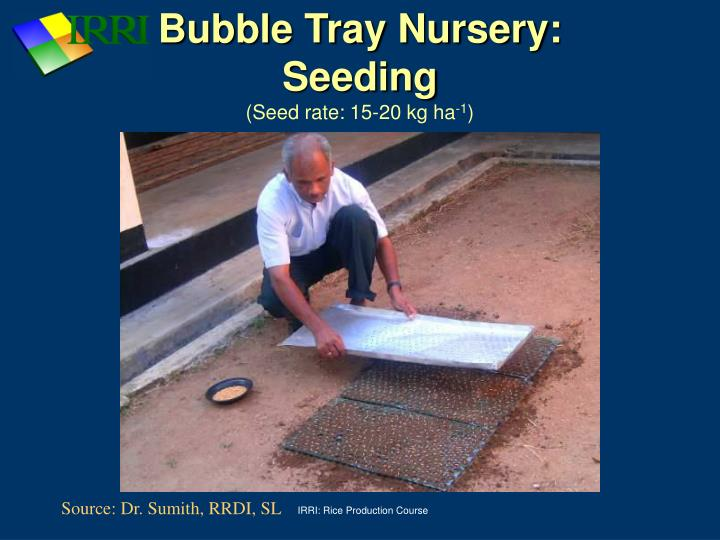 Bubble Tray Nursery: Seeding
