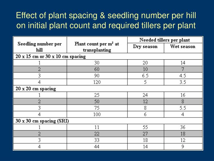 Effect of plant spacing & seedling number per hill on initial plant count and required tillers per plant