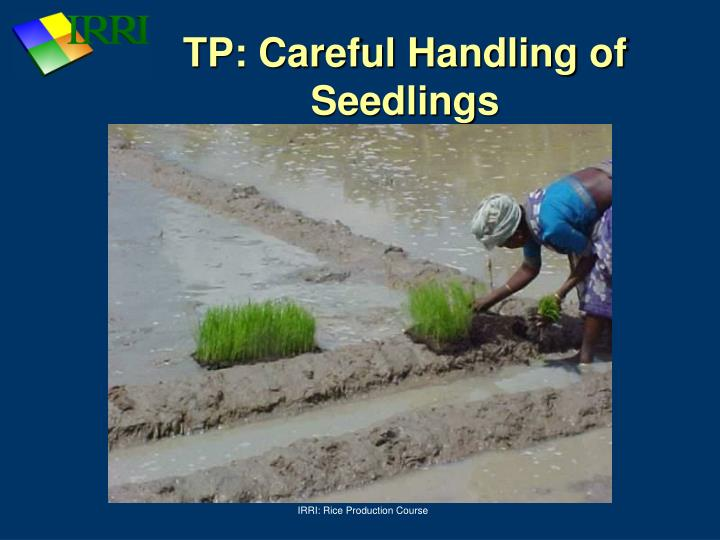 TP: Careful Handling of Seedlings