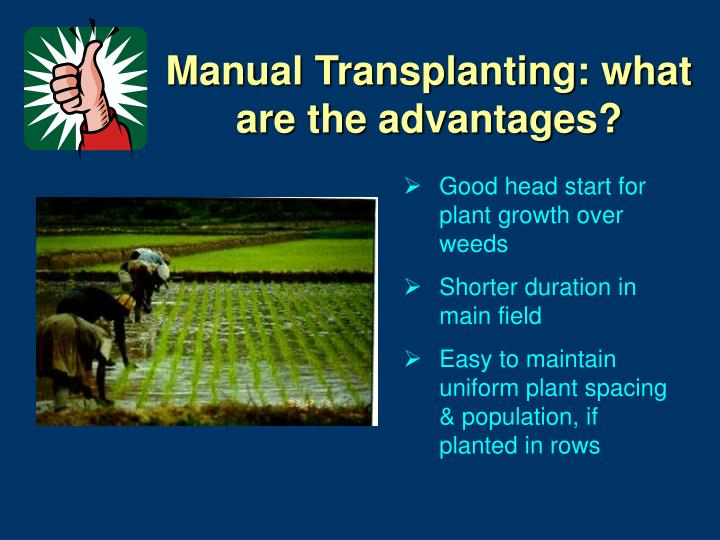 Manual Transplanting: what are the advantages?