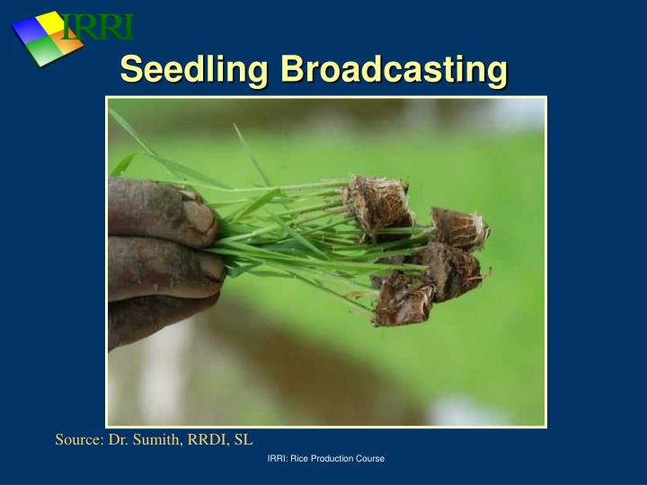 Seedling Broadcasting