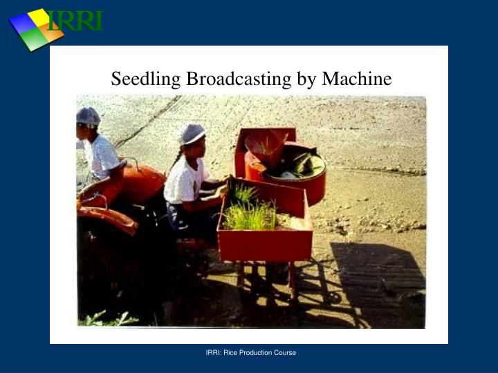Seedling Broadcasting by Machine
