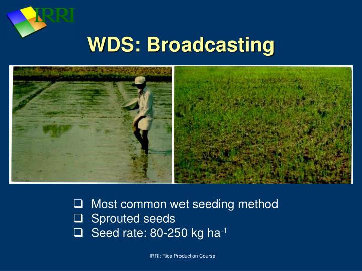 WDS: Broadcasting