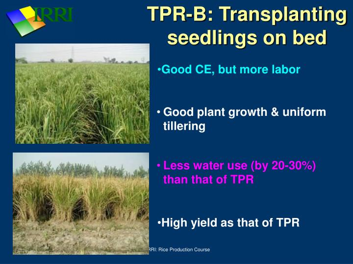 TPR-B: Transplanting seedlings on bed