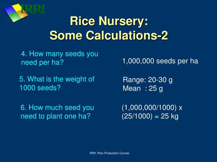 Rice Nursery: