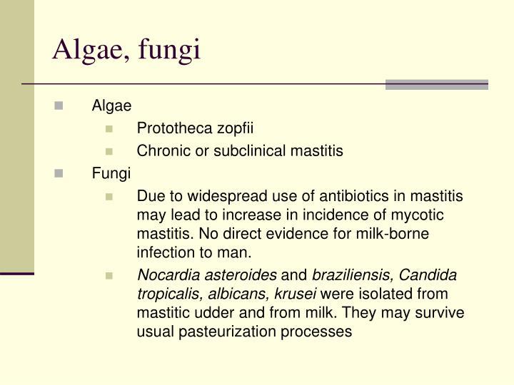 Algae, fungi