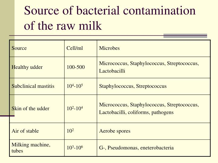 Source of bacterial contamination of the raw milk