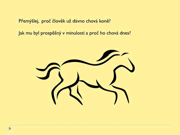 Přemýšlej,  proč člověk už dávno chová koně?