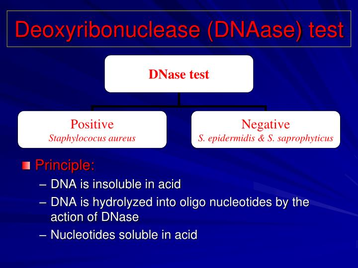 Deoxyribonuclease (DNAase) test