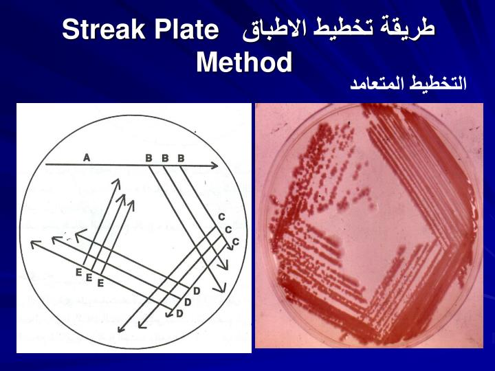 Streak plate method