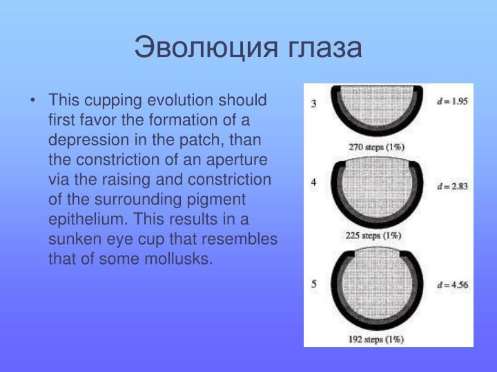 Эволюция глаза