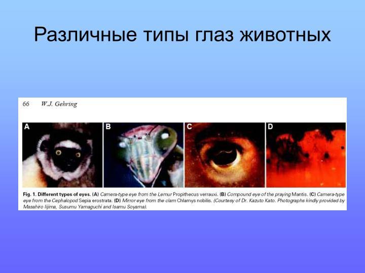 Различные типы глаз животных
