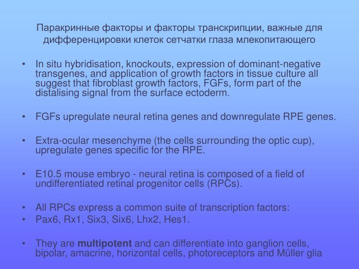 Паракринные факторы и факторы транскрипции, важные для дифференцировки клеток сетчатки глаза млекопитающего