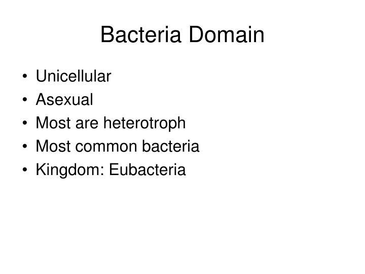 Bacteria Domain