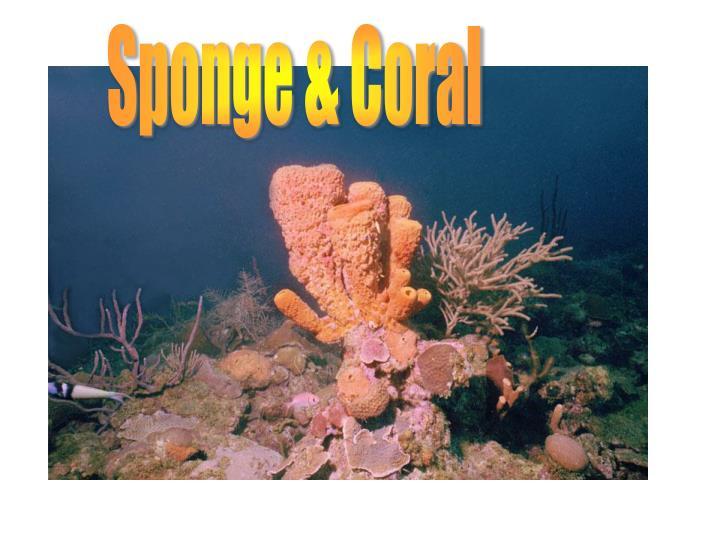 Sponge & Coral