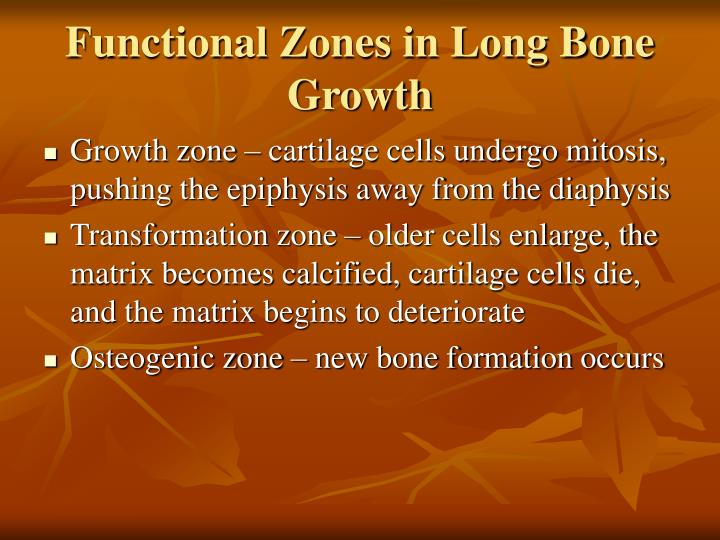 Functional Zones in Long Bone Growth