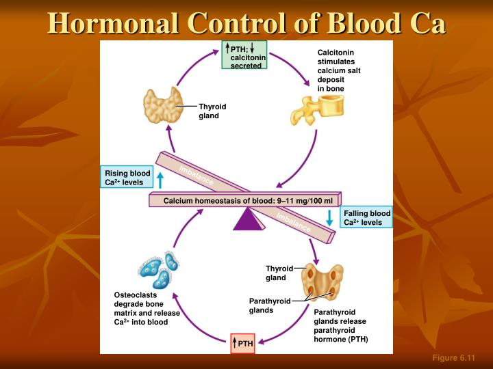 Hormonal Control of Blood Ca