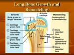 long bone growth and remodeling1