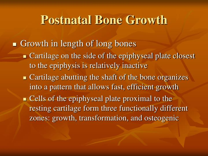 Postnatal Bone Growth