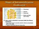 stages of intramembranous ossification2