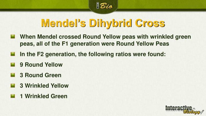 Mendel's Dihybrid Cross