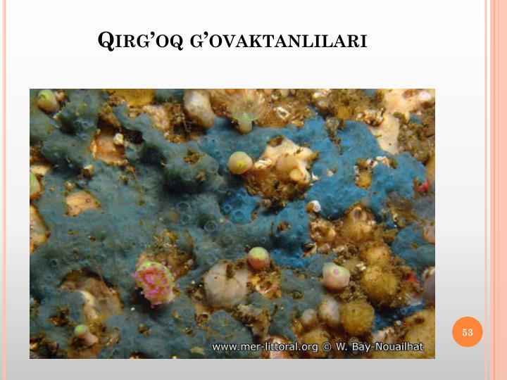 Qirg'oq