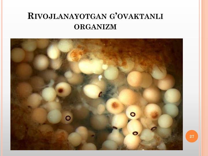 Rivojlanayotgan