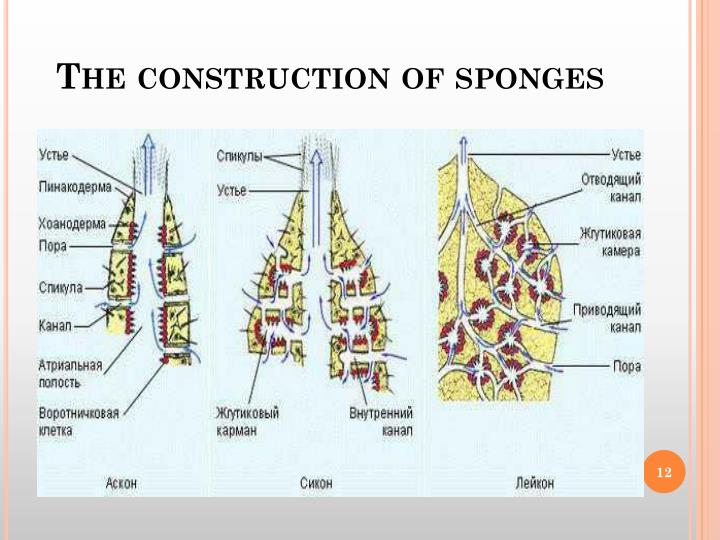 The construction of sponges