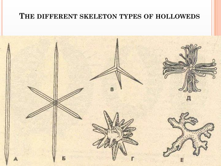 The different skeleton types of