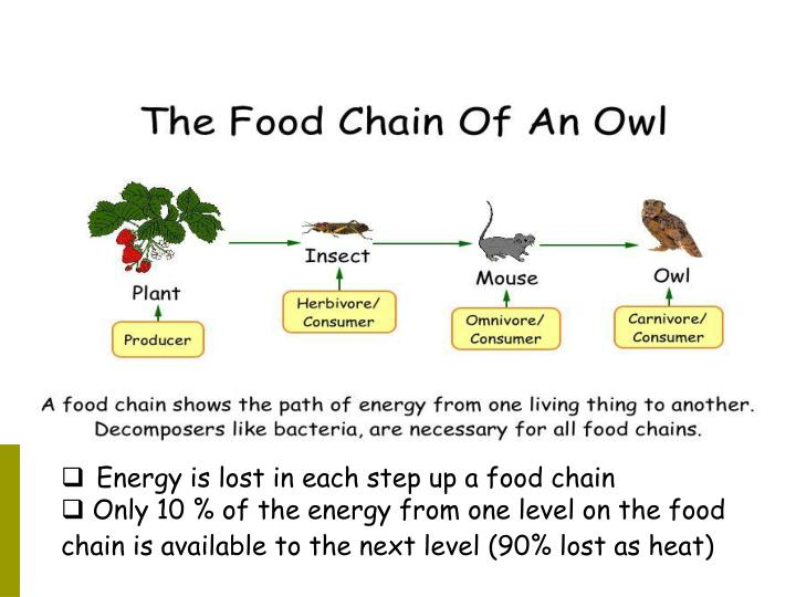 Energy is lost in each step up a food chain