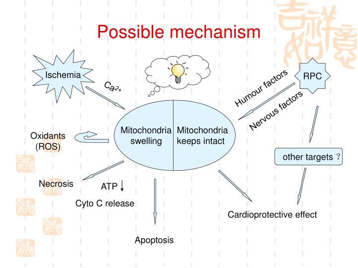 Possible mechanism