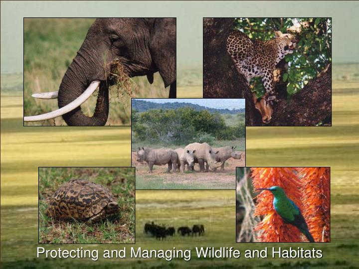 Protecting and Managing Wildlife and Habitats