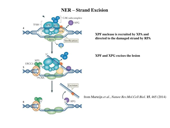 NER – Strand Excision