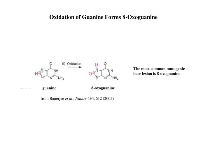 Oxidation of Guanine Forms 8-Oxoguanine