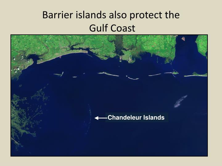 Barrier islands also protect the