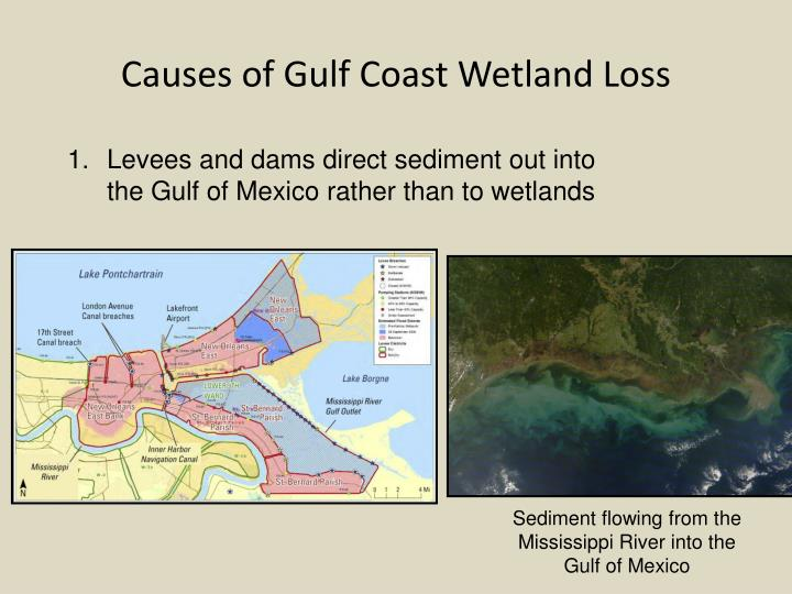 Causes of Gulf Coast Wetland Loss