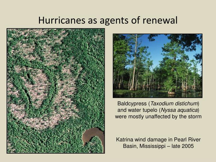 Hurricanes as agents of renewal