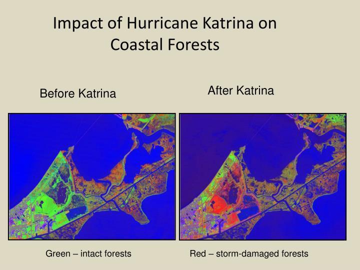 Impact of Hurricane Katrina on   Coastal Forests