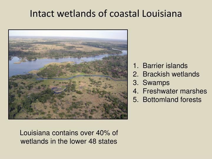 Intact wetlands of coastal Louisiana
