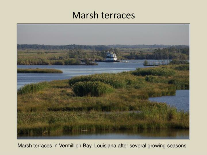 Marsh terraces
