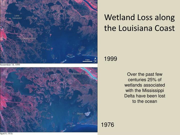 Wetland Loss along the Louisiana Coast