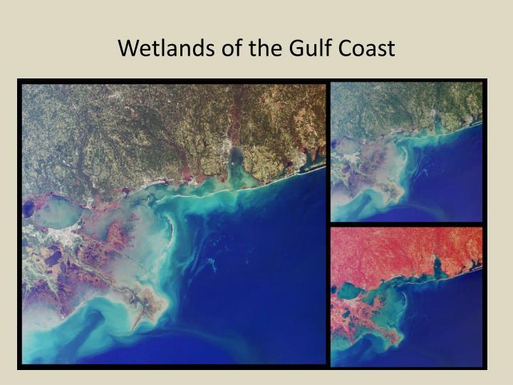 Wetlands of the Gulf Coast