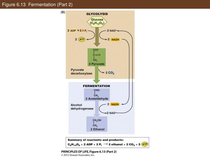 Figure 6.13  Fermentation (Part 2)