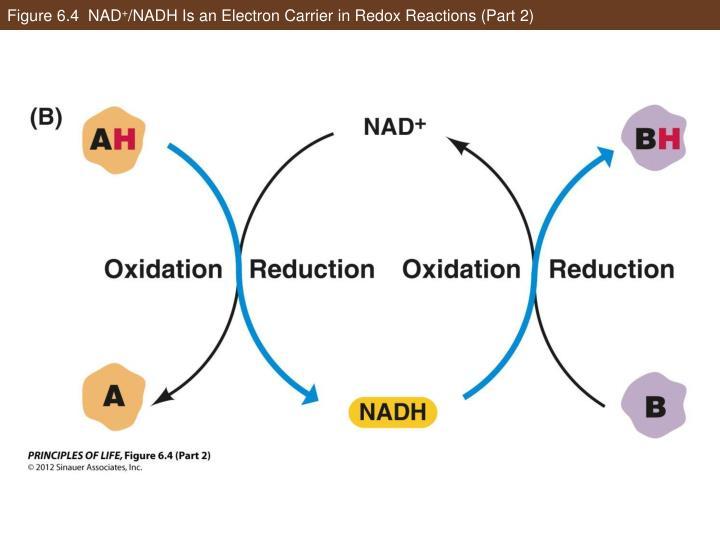 Figure 6.4  NAD