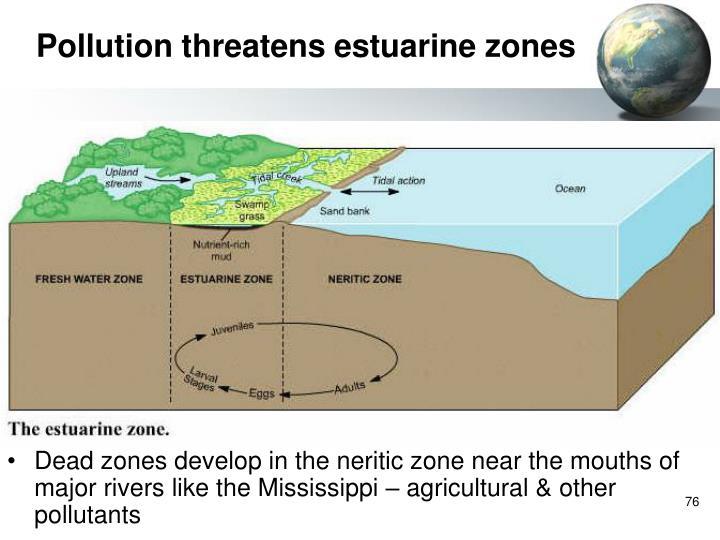 Pollution threatens estuarine zones
